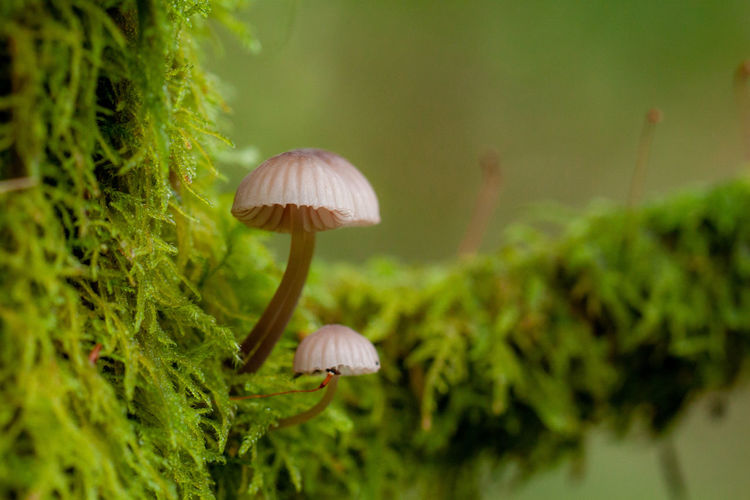 Mushroom Fungus Vegetable Food Plant Growth Close-up Focus On Foreground Nature Beauty In Nature Toadstool Land Tree No People Fragility Forest Selective Focus Green Color Day Vulnerability  Outdoors Fungi EyeEmNewHere