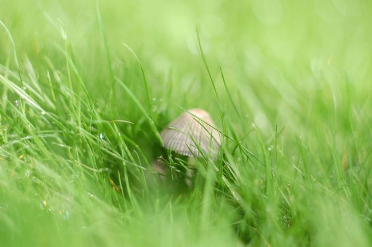 Grass Selective Focus Growth Green Color Tranquility Close-up Field Blade Of Grass Nature Grassy Beauty In Nature Backgrounds Full Frame Lush Foliage Grass Area Plant Day Surface Level Fragility Dew Mushrooms Fungi Dof Depth Of Field