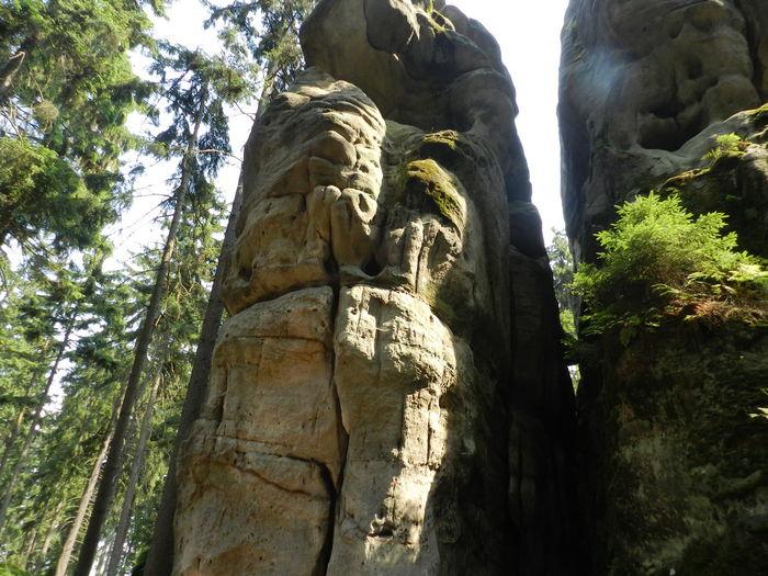 Nature Stone Woods Steny Sightsee Landscape Forest Rocks Rock Tree Czech Republic