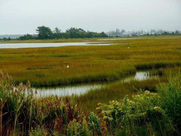 High tide in the marsh Animal Themes Animals In The Wild Beauty In Nature Bird Day Grass Growth Landscape Marsh Nature No People Outdoors Plant Reflection Scenics Sky Tranquil Scene Tranquility Tree Water