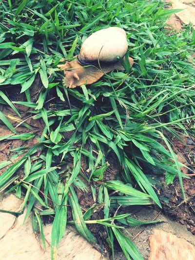 Growth Leaf