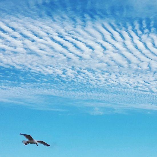 Seagull Clouds Sky