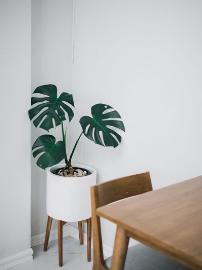 Take it easy Architecture Built Structure Chair Copy Space Green Color Growth Home Interior Houseplant Indoors  Leaf Nature No People Plant Plant Part Potted Plant Seat Stool Table Wall - Building Feature White Color Wood - Material