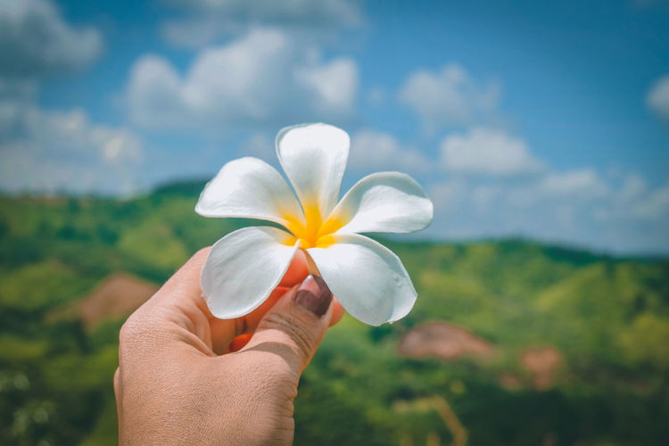 Cropped hand of woman holding frangipani against sky