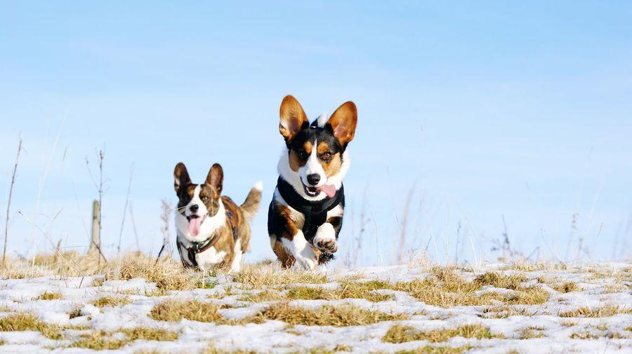 Dogs running on field