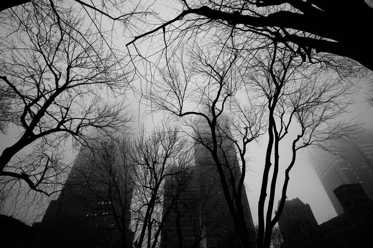 Winter Black & White Place Du Canada Fog Skyscrapers Park Wide Angle Trees Urbanphotography Urban Landscape Downtown Montreal, Canada Montréal