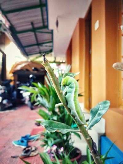 Potted Plant Focus On Foreground Growth New Life Green Color Houseplant Outdoors Plant Life