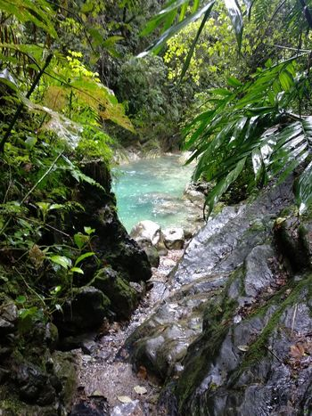 naturaleza Tree Water River Forest Rock Formation