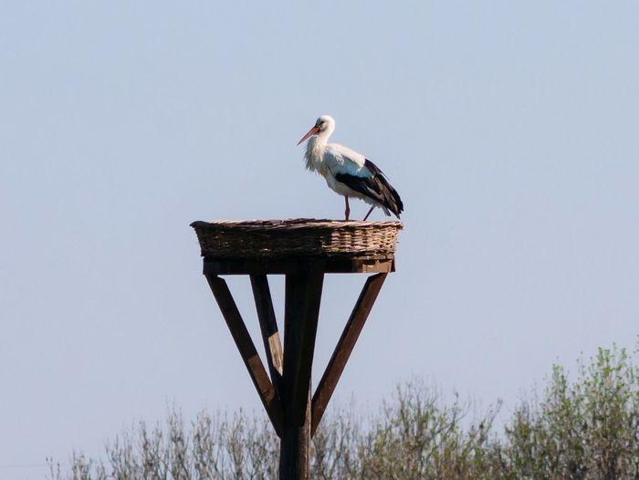 Stork on a