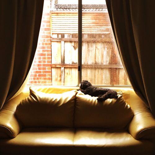 EyeEm Best Shots Under The Shining Watching Rain Drops Dog❤ Dog Love