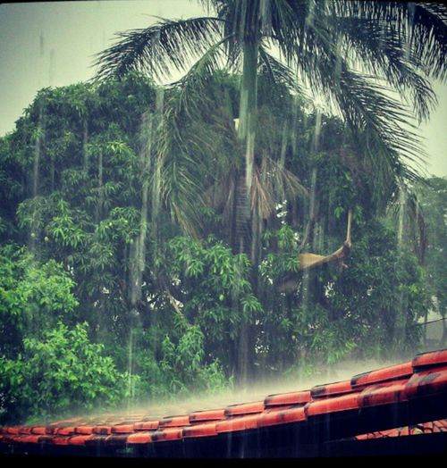 Rain Chuva