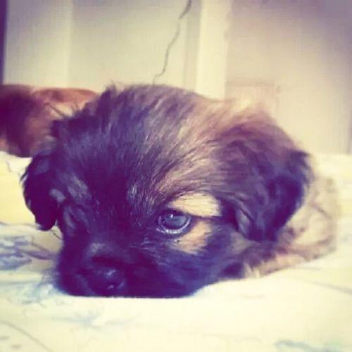 Ilovemydog chiko my baby ??