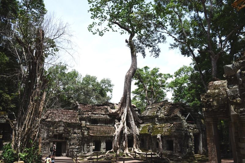 Mother Nature. Tree Architecture Built Structure Old Ruin Tree Trunk Branch Building Exterior Ruined History Growth The Past Damaged Ancient Ancient Civilization Day Obsolete Archeology Outdoors Place Of Worship Cambodia Temple Landmark Monument Travel Destinations Miles Away Neighborhood Map