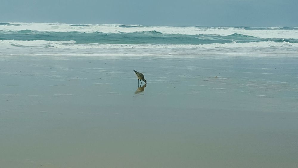 Seeside Walk Bird Reflection Wet Eating Surf Wildlife September Waves Cold Sand France 🇫🇷 Biscarrosse Bordeaux