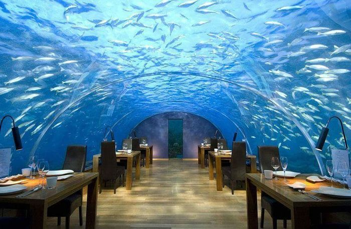 Aquarium Blue Sea Illuminated Architecture Indoors  Built Structure Vacations Water No People Luxury Hotel Day Nature UnderSea