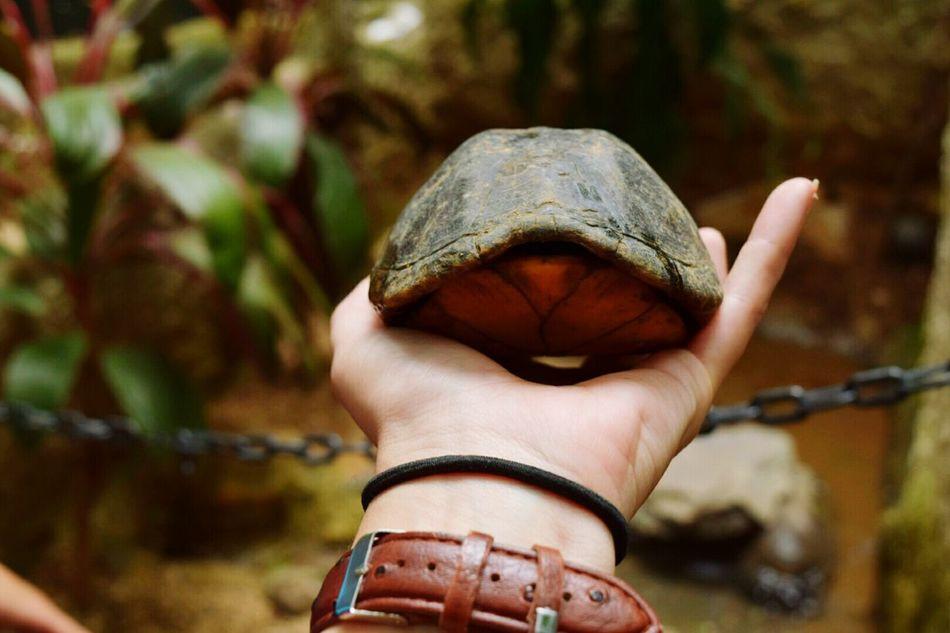 🐢 turtle