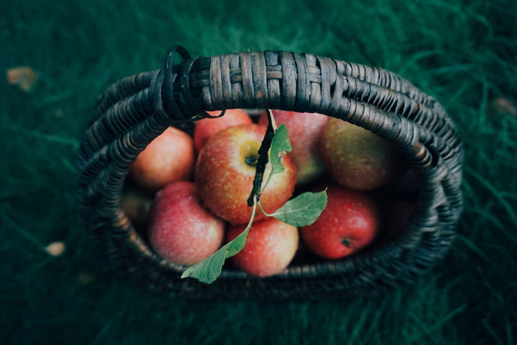 a basket full of apples Harvest Autumn Fall EyeEm Selects Fruit Healthy Lifestyle Leaf Red Close-up Food And Drink Green Color Apple Tree Farmland Orchard Harvesting Cultivated Land Juicy Ripe Apple Fruit Tree Combine Harvester Twig Picking Apple - Fruit