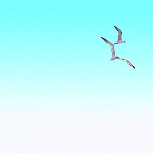 Birds Sky Candy Minimal Candyminimal Blue