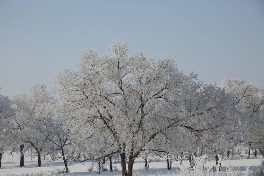 Bare Tree Beauty In Nature Branch Clear Sky Cold Temperature Day Freshness Frozen Landscape Low Angle View Nature No People Outdoors Scenics Sky Snow Tranquil Scene Tranquility Tree Weather Winter