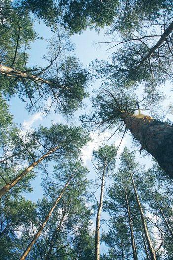 Taking Photos Trees Poland