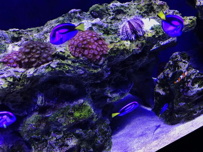 Blue Bluetang Nemo Finding Nemo Findingdory Dory Finding Dory