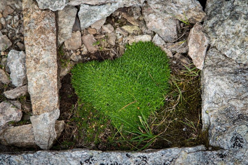 Everything in its right place. Green Color Stone Material Rock - Object Outdoors Nature Plant Grass Textured  Heart Heart Shape Love EyeEm EyeEm Gallery Summer Canon Romantic Getting Inspired Eye4photography  EyeEm Nature Lover Place Of Heart