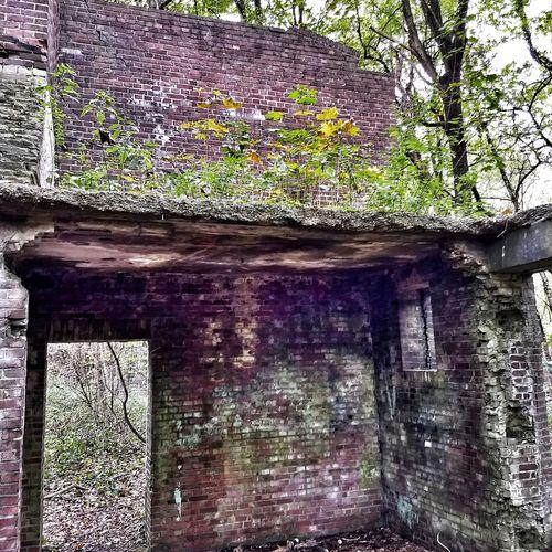 Fliegerhorst Ruined Urban Nature