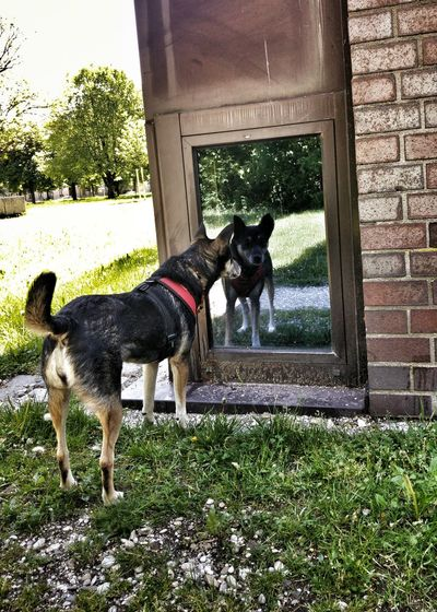 Curious Mirroring Mirror Picture Animalphotography I Love My Dog Animals Dog Window Window Mirror Walking With My Dog