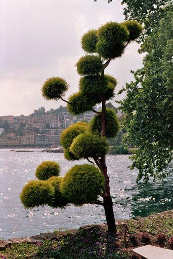 Trees in garden against sky