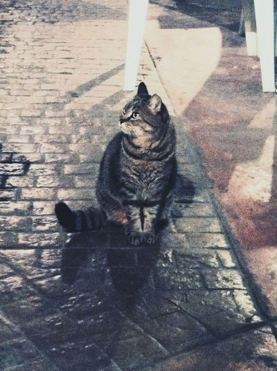 Cat Cats LongTimeAgo  Favouriteanimal Wildcat Cold Days Streetcat Taking Photos Enjoying Life Hello World Toomuchfilter Relaxing