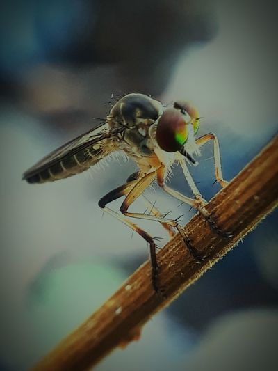 EyeEm Selects Insect Close-up