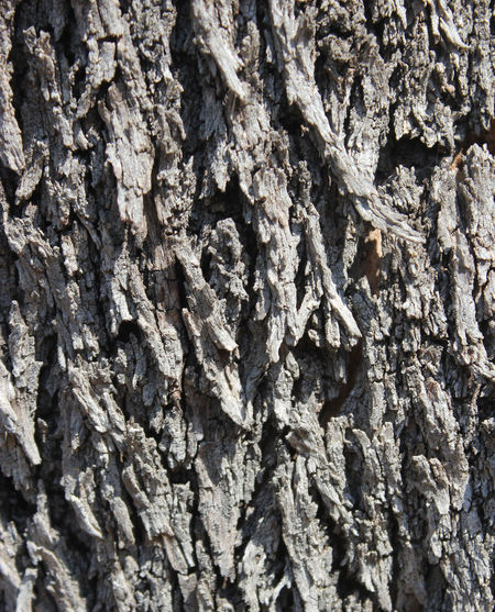 Eroded Rough Texture Textured  Wood
