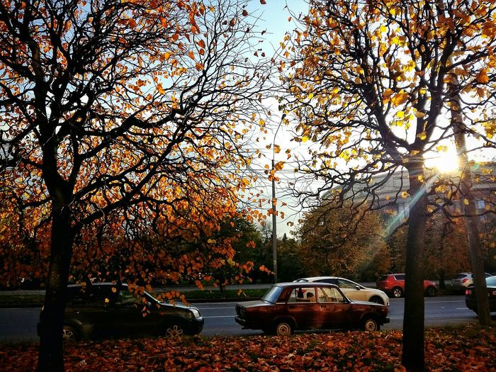 Autumn Outdoors Tree Car No People Day Tranquil Scene Scenics St Petersburg Saint Petersburg City Road Autumn October 2017