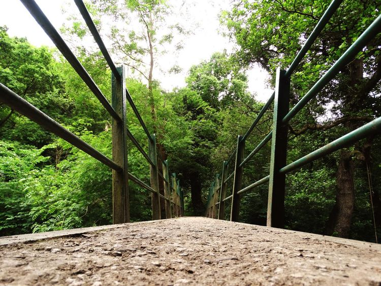 Bridge. Bridge Parallel Low Angle View Stone Railing Forest Trees Bridge - Man Made Structure Nature Wildlife & Nature Light Green Greenery Surface Level Pedestrian Walk The Way Forward Outdoors Day Showcase June Idyllic Textured