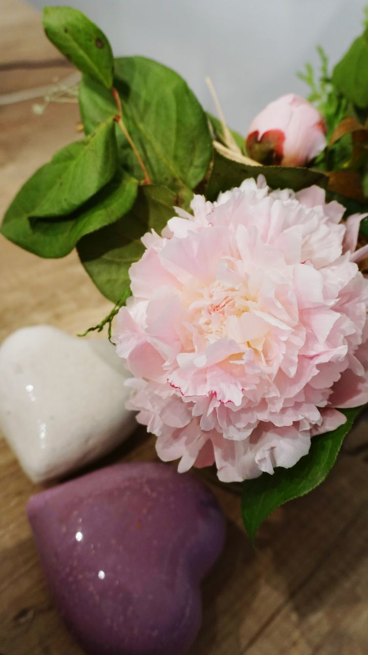 flower, freshness, table, pink color, no people, indoors, close-up, leaf, green color, beauty in nature, nature, food, fragility, flower head, day