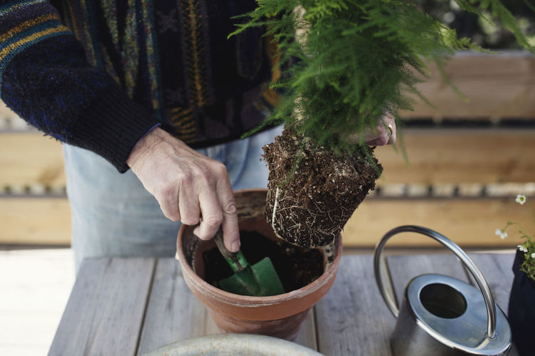 Midsection of person holding flower pot on table