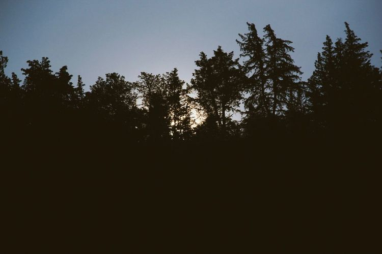 Sun also rises Tree Silhouette Nature No People Clear Sky Beauty In Nature Low Angle View Tranquility Forest Outdoors Sky