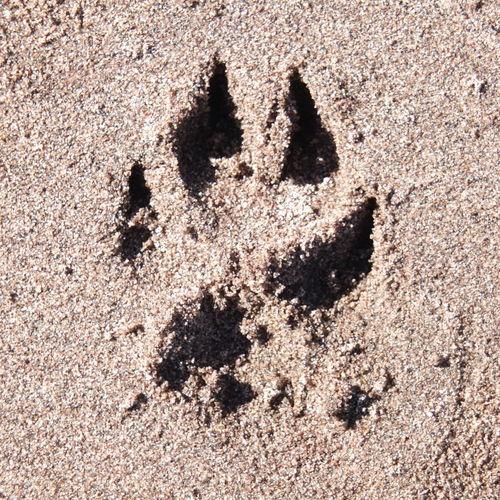 Camino. Sand Outdoors No People Beach Day HuaweiP9 Dogslife Huella En La Arena