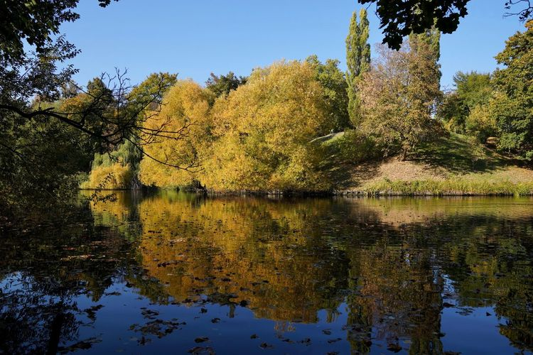 autumn at it's best * Volkspark Wilmersdorf Berlin Autumn Beauty In Nature Change Day Forest Green Color Growth Lake Nature No People Non-urban Scene Outdoors Plant Reflection Scenics - Nature Sky Tranquil Scene Tranquility Tree Water Waterfront Autumn Mood 2018 In One Photograph