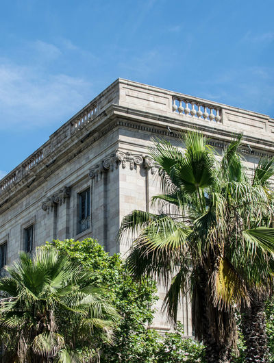 Typical Barcelona building Barcelona EyeEmNewHere Architectural Column Architecture Building Building Exterior Built Structure City Cloud - Sky Day Green Color Growth History Low Angle View Nature No People Outdoors Palm Leaf Palm Tree Plant Sky Tree Tropical Climate