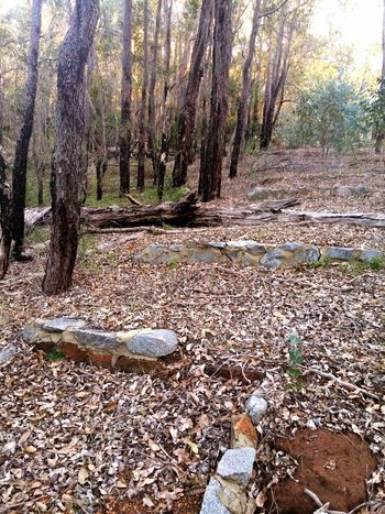 Discovered these neglected steps by accident near the dam outside of Perth Western Australia. Forest No People Secret Garden Ruins Of A Past Western Australia Perth Australia Autumn Leaves Autumn Autumn Forest Wintertime