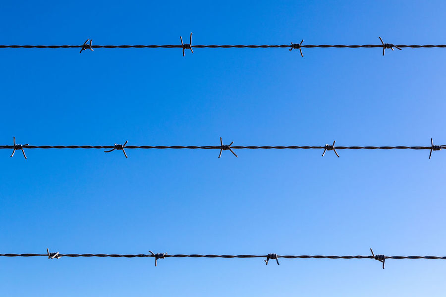 Rows of barbed wire fencing against blue sky Australia Australian Lines Animal Themes Backgrounds Barbed Wire Bird Blue Clear Sky Close-up Day Low Angle View Metal Nature No People Nsw Outdoors Protection Razor Wire Safety Security Silhouette Sky