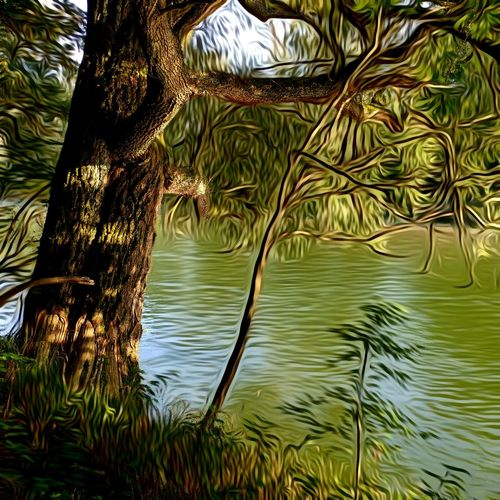 Water Idyllic Beauty In Nature Green Color Magic Tree