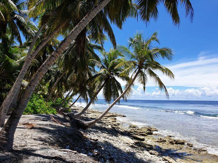 athiri Palm