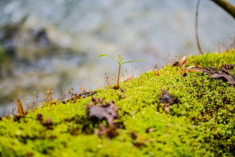 Beauty In Nature Close Up Close-up Day Detail Fragility Freshness Grass Green Color Growth Leaf Moss Mossporn Nature No People Outdoors Overgrown Plant Plants That Live In Rivers Selective Focus