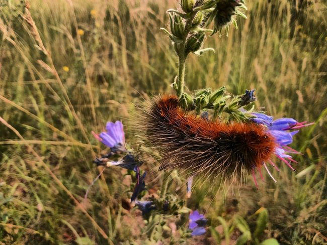 The Purist (no Edit, No Filter) Flower Plant Nature Growth Fragility Wildflower No People Day Outdoors Thistle Beauty In Nature Flower Head Uncultivated One Animal Animal Themes Animals In The Wild Grass Close-up Freshness Butterfly