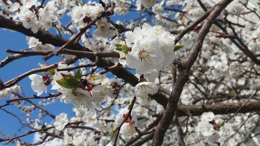 🌸spring Day Springtime 💕