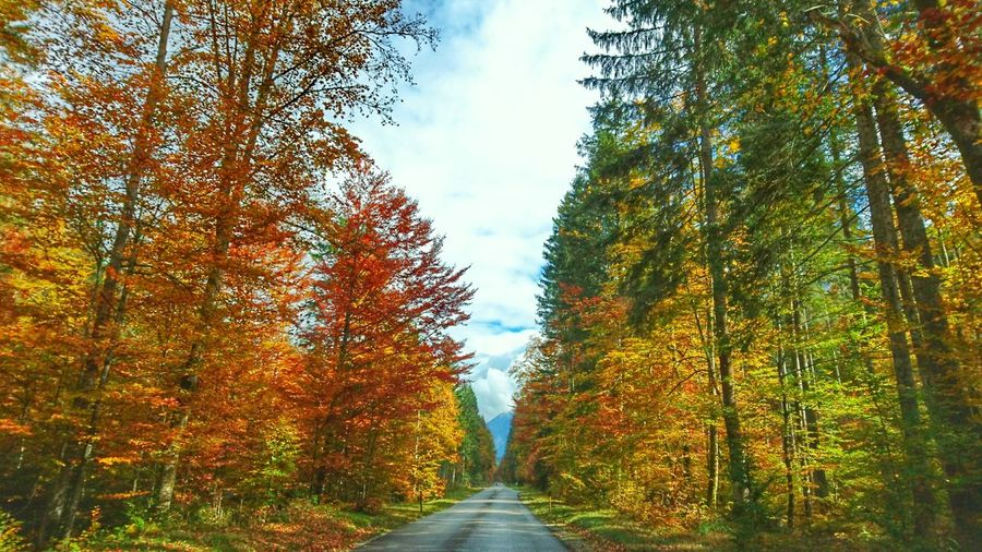 Empty road amidst trees against sky during autumn