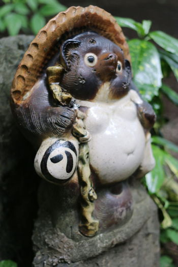 Tanuki Animal