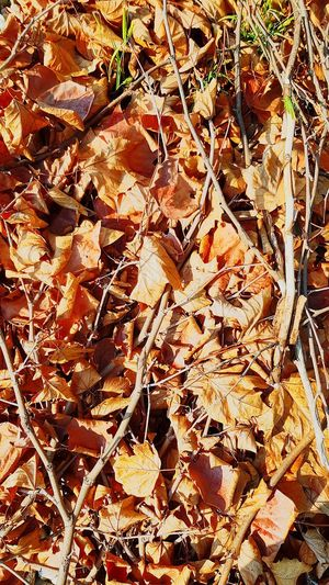 Autumn leaves Decoration Foliage Harvest Season Ground Deciduous Tree Colour Change Poetry Melancholy Shedding Of Leaves September Transition Season  Fell Down Tree Bough Brown Backgrounds Full Frame Leaf Close-up Leaves Fall Dry Fallen Autumn Fallen Leaf Autumn Collection Leaf Vein Wilted Plant Woods